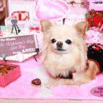 「私の部屋」バレンタインVr2