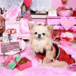 「私の部屋」バレンタインVr1